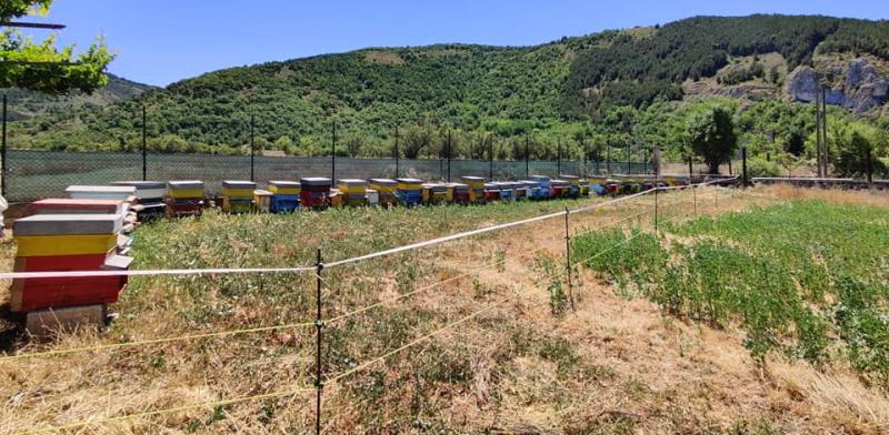 Installato a Pescina un recinto per proteggere un apiario dall'orso marsicano