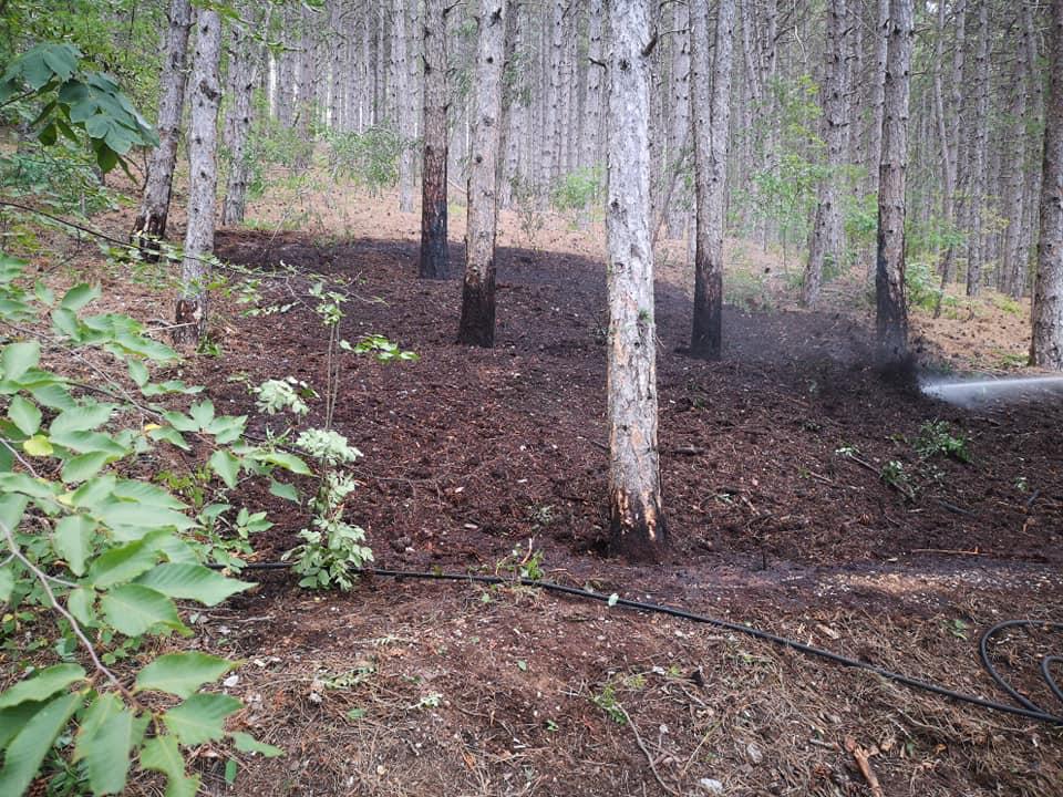Principio di incendio alla pineta di Celano, evitato il peggio grazie alla Polizia Locale di Celano e ai Vigili del Fuoco