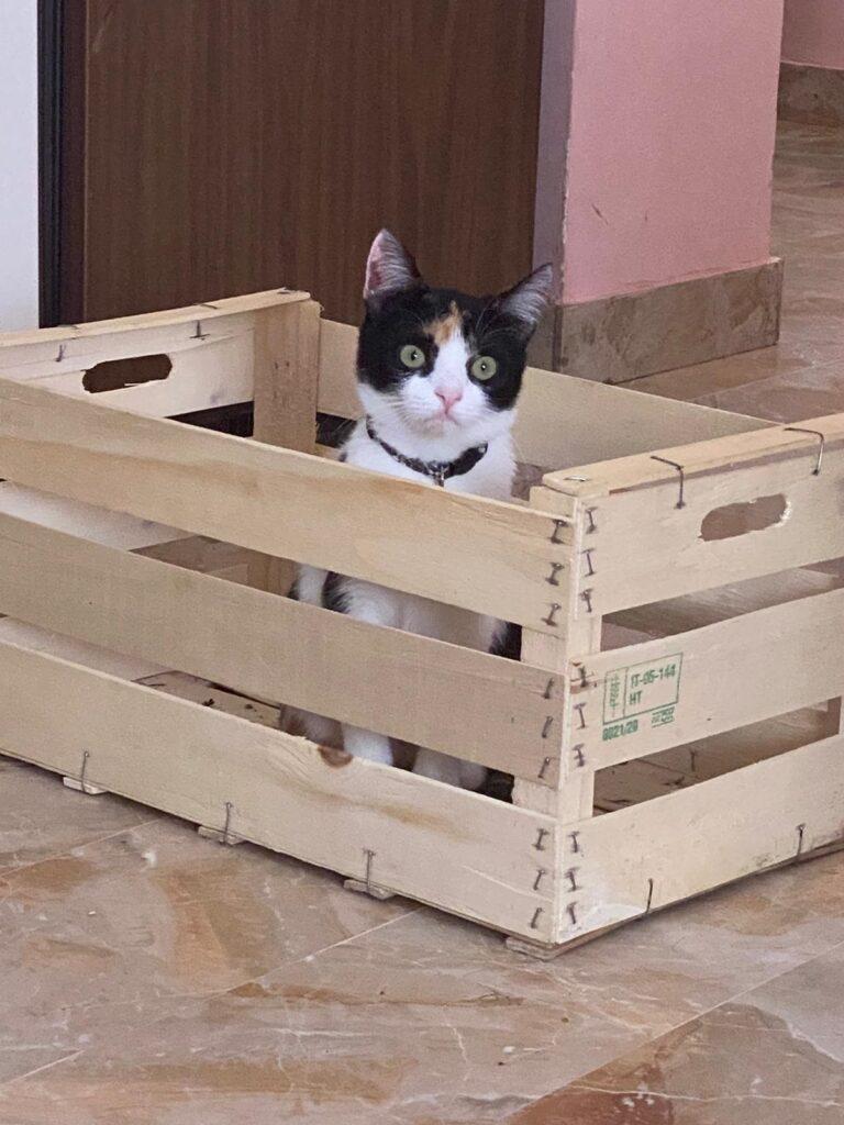"""Gattina scompare a Trasacco, l'appello del proprietario: """"Per favore aiutatemi a trovarla"""""""