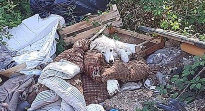 Recuperata una cagnolina trovata tra l'immondizia tra Cese e Capistrello