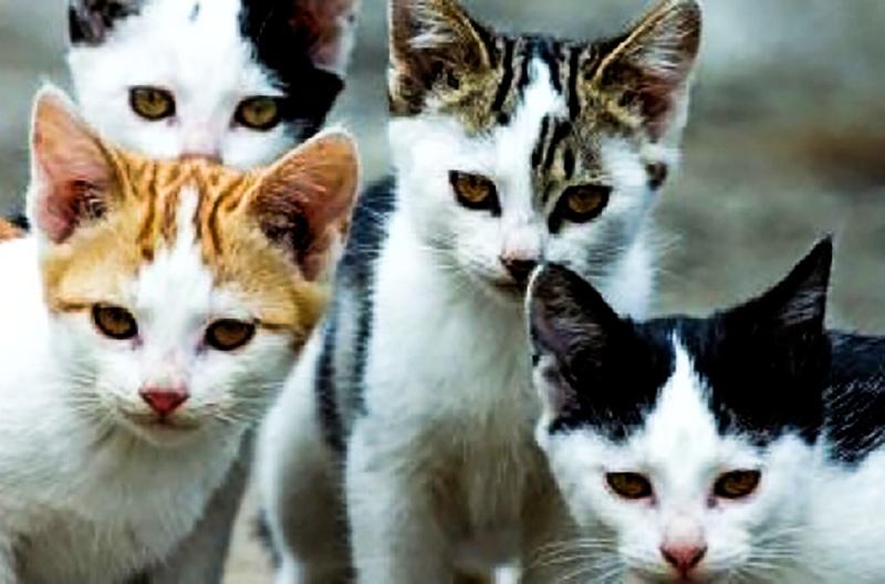 Strage di gatti a Capistrello, sono stati uccisi di botte