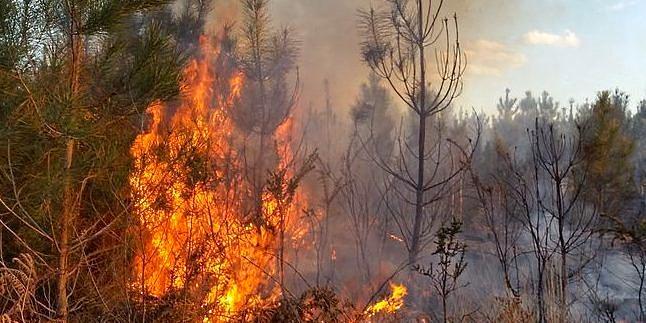 Dopo gli incendi si fermi la caccia: appello di Legambiente, Lipu e WWF alla Regione Abruzzo