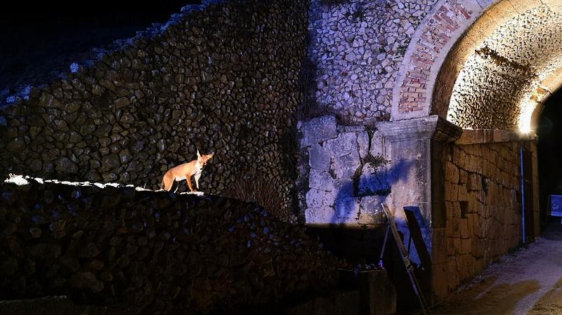Una volpe sorveglia l'ingresso all'Anfiteatro romano di Alba Fucens