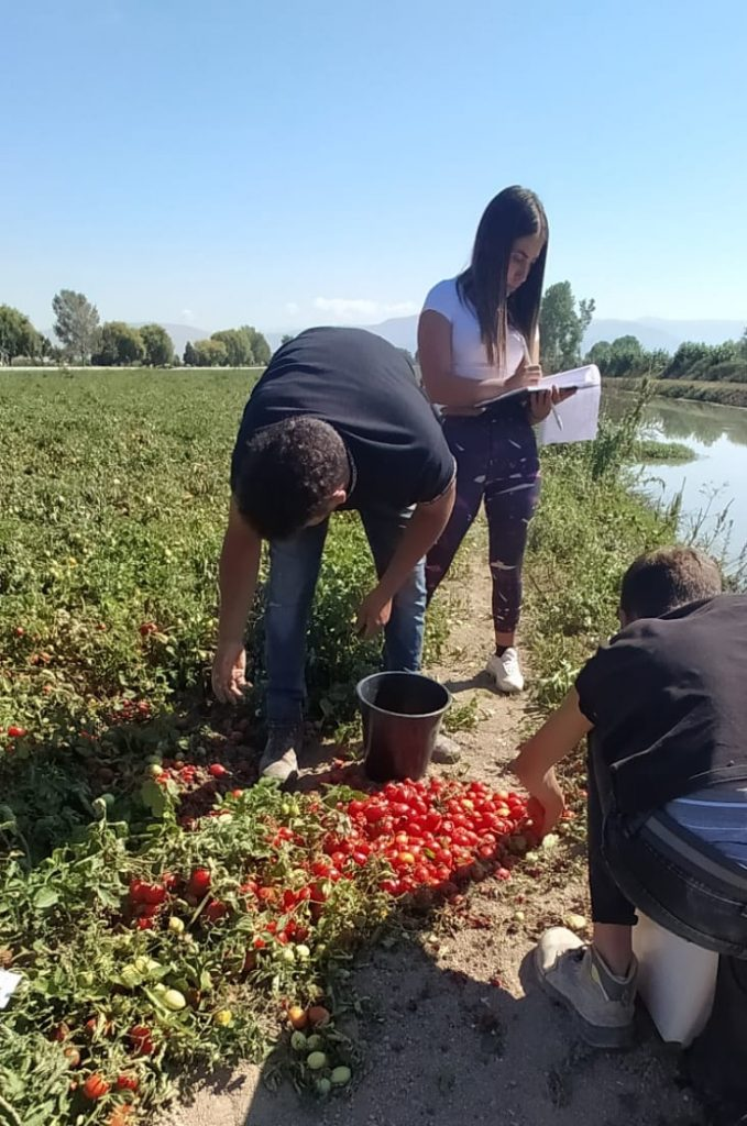 """Istituto Agrario """"A. Serpieri"""", prove in campo per valutare nuove varietà di pomodoro con ISI Sementi SPA e Lago d'oro dei F.lli D'Apice"""