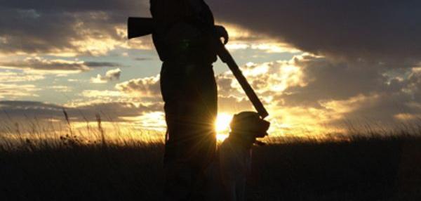 """Cane da caccia abbandonato: """"i cacciatori degni di questo nome amano e rispettano i propri cani, non generalizziamo"""""""