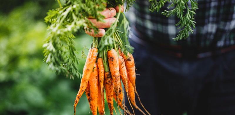 Progetti di sviluppo della filiera agroalimentare: in arrivo il nuovo strumento finanziario Ismea Investe