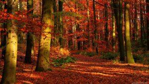 """Il benvenuto all'autunno con il racconto """"Lo spazzino e la foglia"""""""