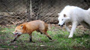 Strage di animali sui Piani della Renga: sarebbero stati avvelenati