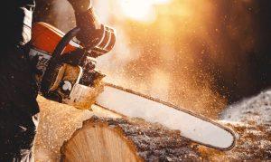 Taglio abete pericoloso nel giardino della scuola, il Comune di Massa D'Albe concede gratuitamente la legna da ardere