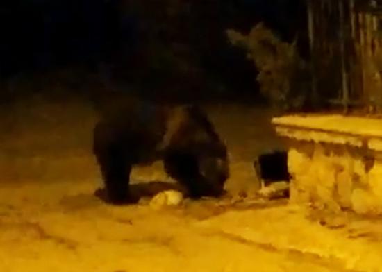 Incursione notturna dell'orso nel centro storico di Lecce nei Marsi