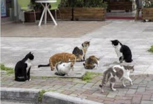 Arrivano a Pescina due colonie feline