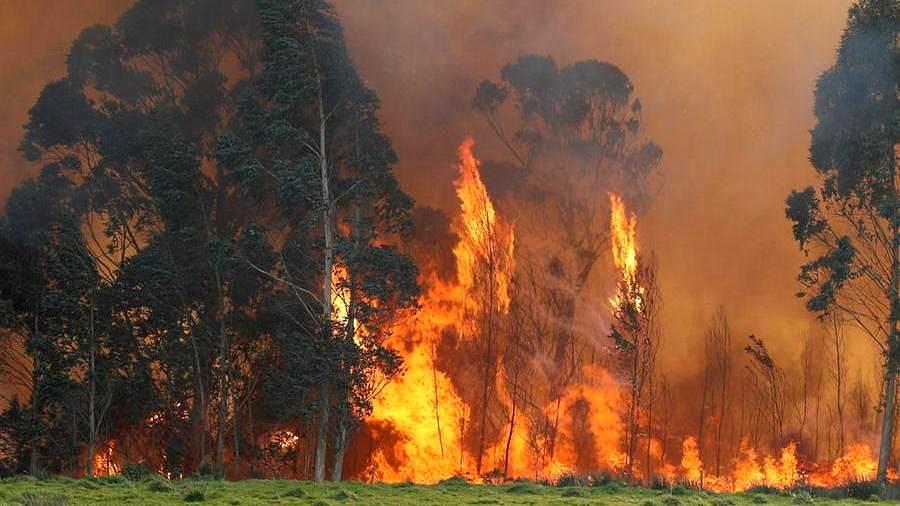 Contrasto ai roghi estivi: pene ancora più severe per chi causa gli incendi boschivi