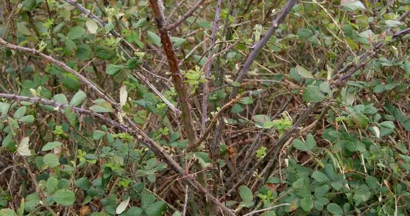 Interventi di pulizia e messa in sicurezza di diverse aree verdi invase da rovi e arbusti nel territorio di Pescina
