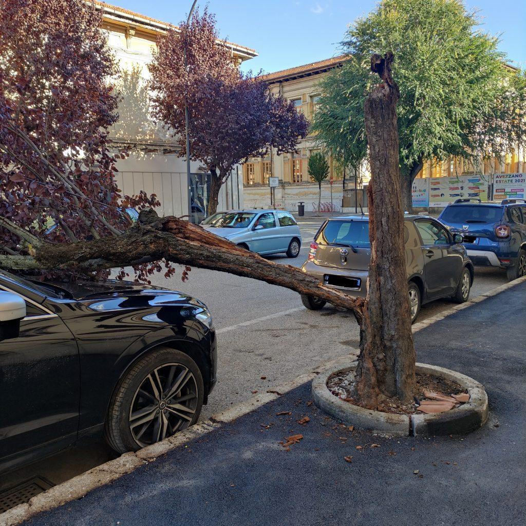 Avezzano, albero cade su un veicolo parcheggiato in centro