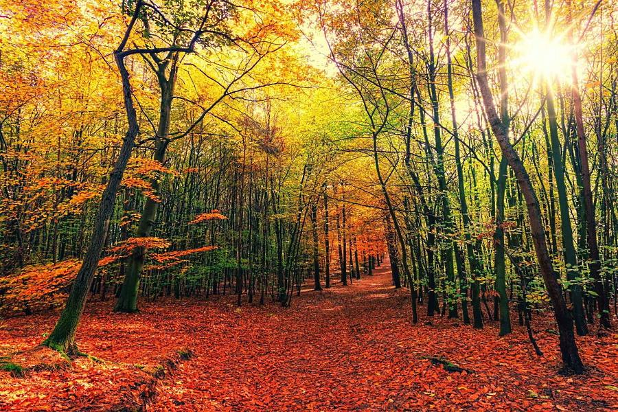 GreenMe, il Cammino dei Briganti è tra i 10 cammini più belli d'Europa per ammirare i colori dell'autunno