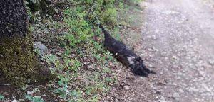 """Cagnolina legata a un albero e uccisa. LNDC sporge denuncia e lancia un appello: """"chi ha visto collabori"""""""