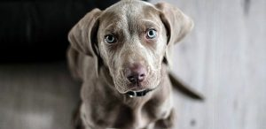 Lotta al randagismo: domani applicazione chip e registrazione dei cani a Cese