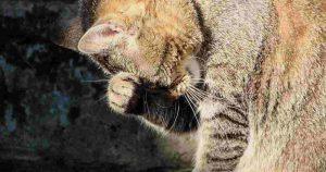 """Avvelenato gatto a Tagliacozzo, la proprietaria: """"fate attenzione ai vostri animali"""""""