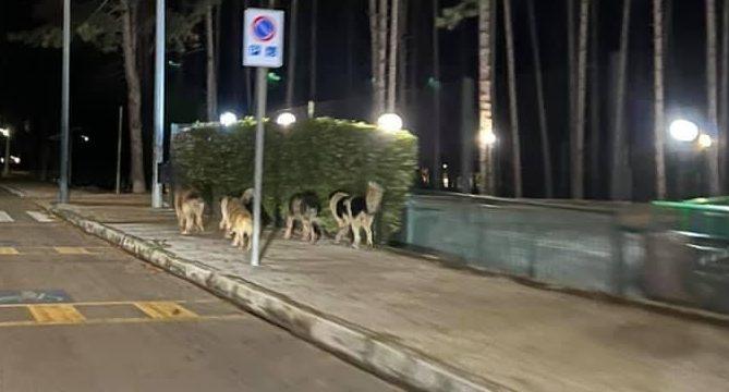 Cani che girovagano per la città, Lega Marsica chiede intervento delle istituzioni