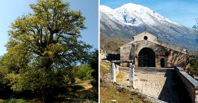 La roverella di S. Maria in Valle Porclaneta a Rosciolo