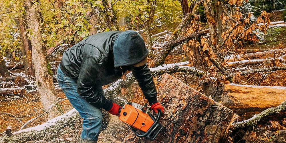 Taglio del bosco a Valle Castagne, il Comune di Trasacco cerca di aumentare gli introiti